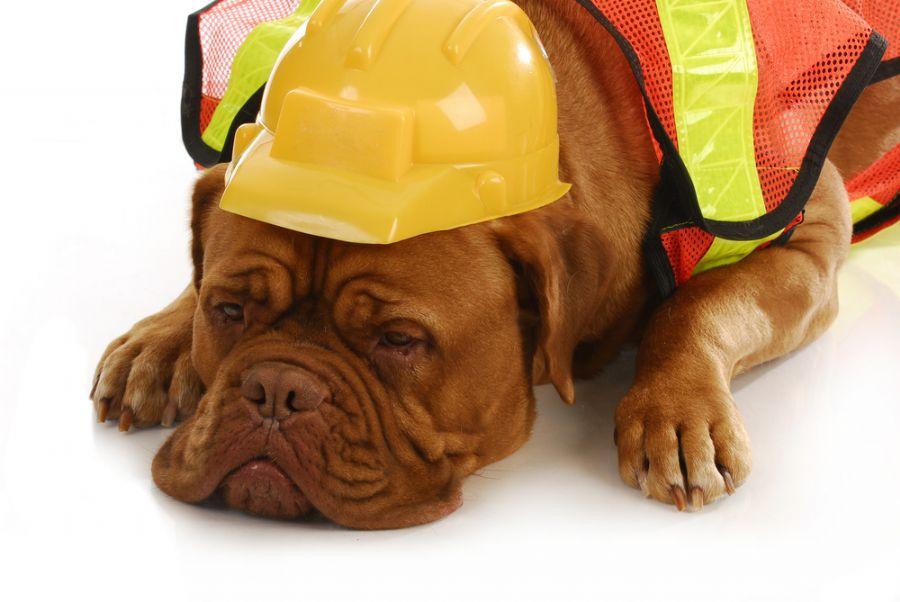 Móveis para escritório – Pets no escritório